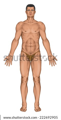 Male, masculine, man's anatomical body, surface anatomy, human body shapes, anterior view, full body - stock photo