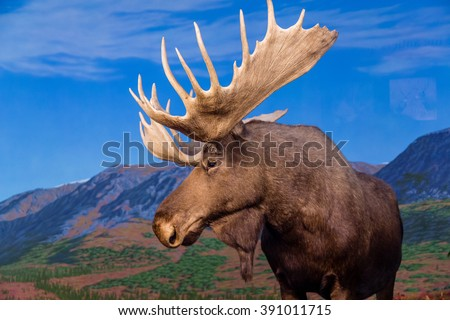 Male Moose Against Backdrop of Mountains - stock photo