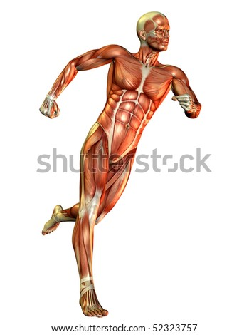 male muscle building course study - stock photo