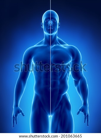 Male Muscular concept - stock photo