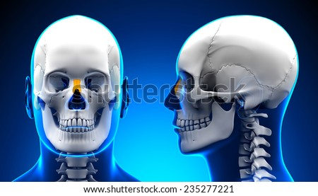 Male Nasal Bone Skull Anatomy - blue concept - stock photo