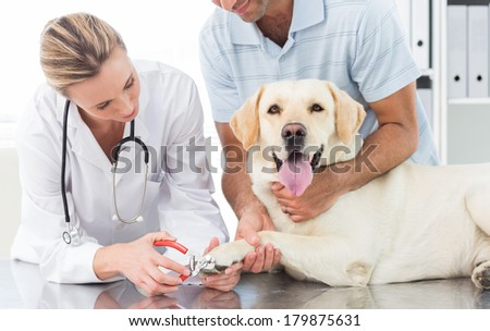 Male owner with dog getting claws trimmed by female vet in clinic - stock photo