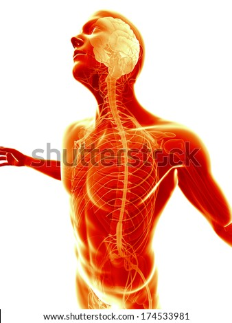 male posing - visible brain and nerves - stock photo