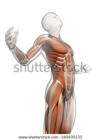 male posing - visible muscles - stock photo