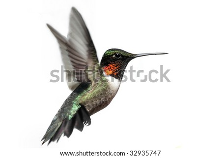 Male Ruby-throated Hummingbird (archilochus colubris) in flight isolated on a white background - stock photo