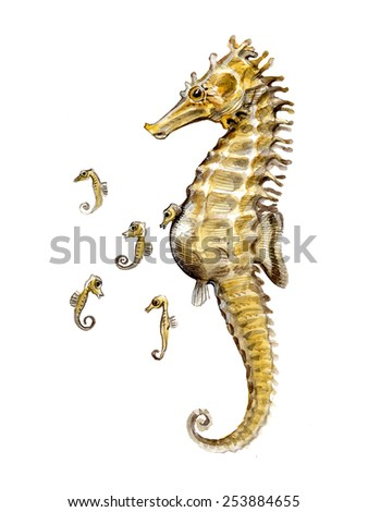 male seahorse with offspring