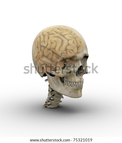 Male skull with brain showing through transparent skull. - stock photo