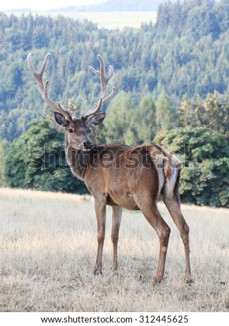 Male stag deer  - stock photo