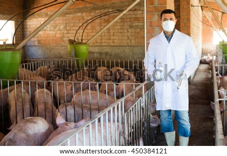 Male veterinarian in facial mask is going to make injection with antibiotics to domestic pigs at pig farm - stock photo
