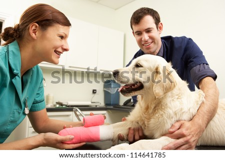 Male Veterinary Surgeon Treating Dog In Surgery - stock photo