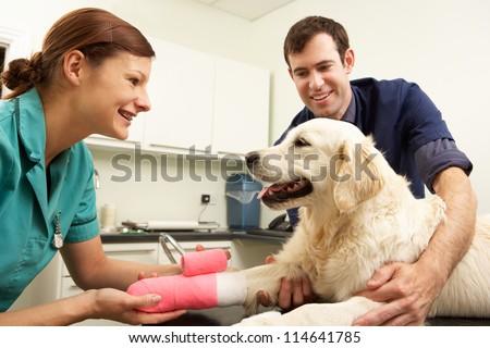 Male Veterinary Surgeon Treating Dog In Surgery - stock photo