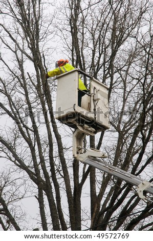 male worker pruning a tree