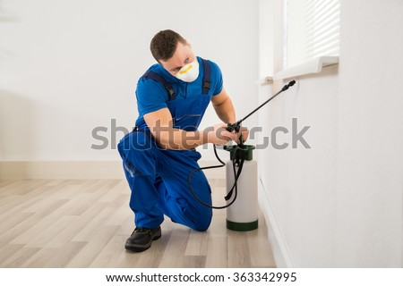 Male worker spraying pesticide on window corner at home - stock photo
