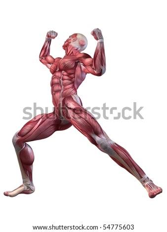 male workout - posing - stock photo