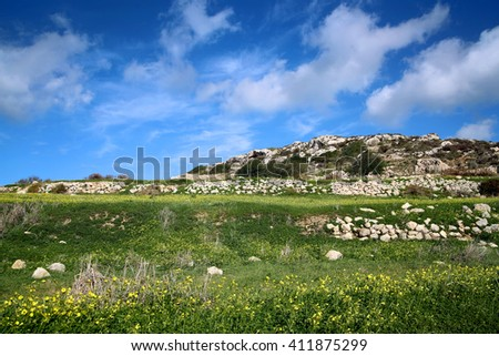 Malta, spring with yellow flowers and blue sky