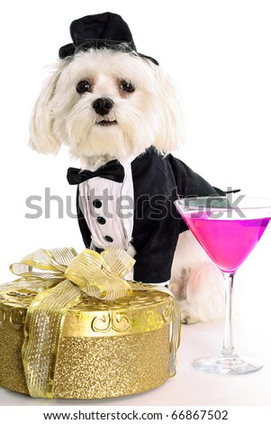 Maltese Cocktail Happy Hour - stock photo