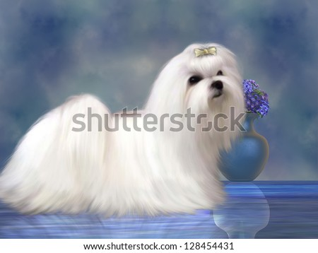 Maltese Dog - The Maltese dog is a small breed of dog in the Toy group which developed from the Mediterranean Region. - stock photo