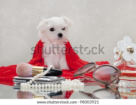 Maltese puppy and women's accessories - stock photo
