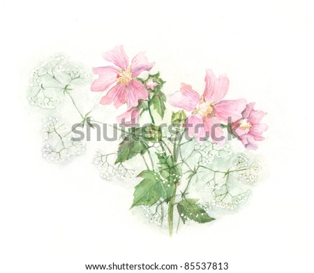 Malva watercolor painting - stock photo
