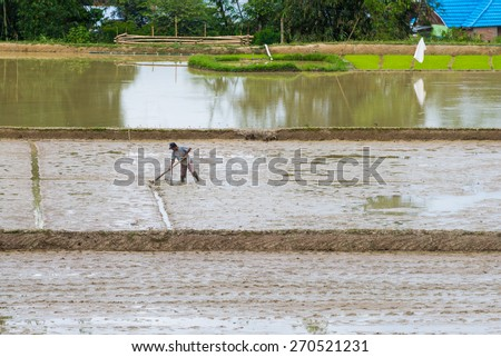 Mamasa, Sulawesi, Indonesia - August 17, 2014: Unidentified man working in the rice fields in the region of Mamasa, Sulawesi, Indonesia. Concept of rural working condition in developing countries. - stock photo