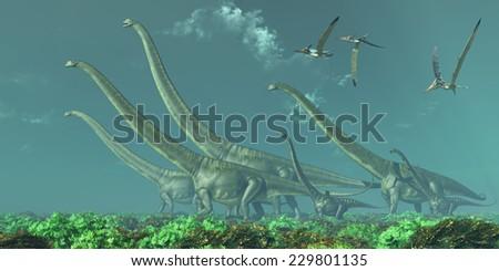 Mamenchisaurus Dinosaur Travels - Pteranodon reptiles fly over a herd of Mamenchisaurus dinosaurs in the Cretaceous Era. - stock photo