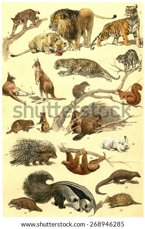 Mammals and forest animals vintage engraved illustration. From La Vie dans la nature, 1890. - stock photo