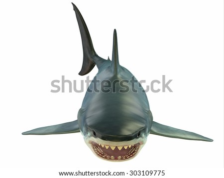 Mammoth Great White Shark - The Great White shark can grow over 8 meters or 26 feet and live to 70 years of age. - stock photo