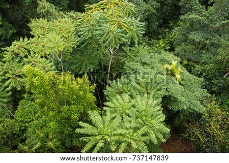 Mamu Rainforest Canopy Walkway in Australia & Rainforest Canopy Stock Images Royalty-Free Images u0026 Vectors ...