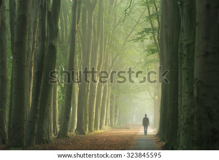 Man alone walking in a foggy lane of trees during a nice, autumn sunrise. - stock photo