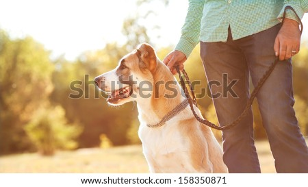 Man and central Asian shepherd walk in the park. He keeps the dog on the leash. - stock photo