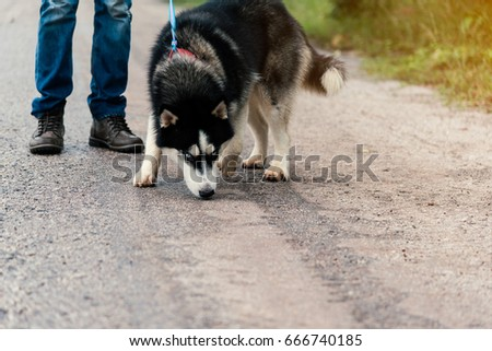 Man and dog Siberian huskies concept.  Asian young man with his dog sitting on street in the park.