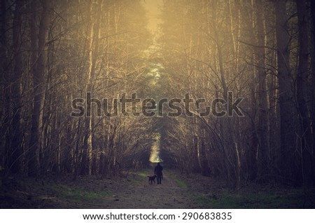 Man and dog walk in the forest at sunset