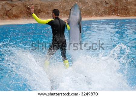 Man and dolphin in waterpark. - stock photo