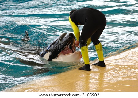 Man and killer whale by the water. - stock photo