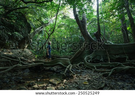Man and nature, huge looking-glass tree and mangroves in dense tropical rainforest jungle - stock photo