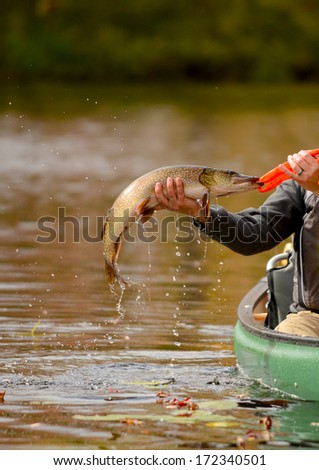 man catching a pike fish while fishing in a canoe - stock photo