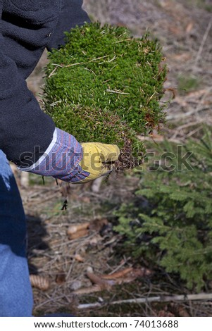 man collecting moss  at the forest for garden and easter  flowerpot decoration. - stock photo