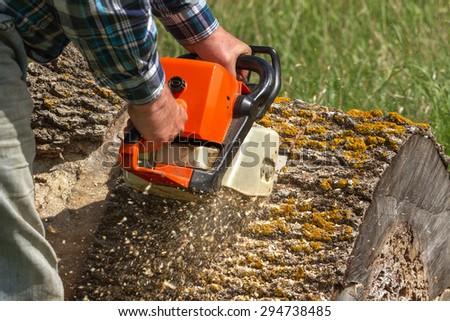 Man cuts a fallen tree, dangerous work. - stock photo