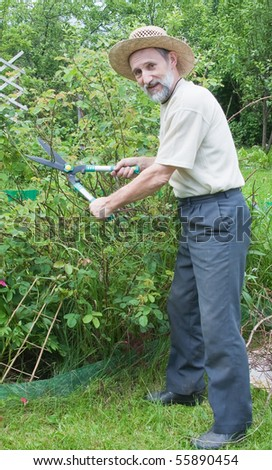 Man cuts off the bushes in the garden