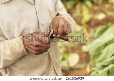 Man cutting a cigar with Cuba's traditional knife - stock photo