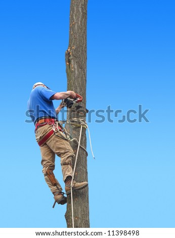 Man cutting down oak tree - stock photo