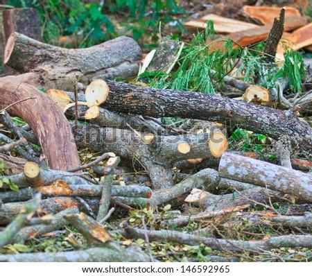 Man cutting piece of wood Cutting wood - stock photo