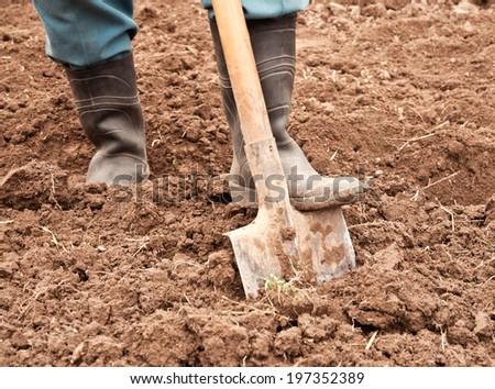 man dig a shovel in the garden - stock photo