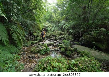 Man exploring dense tropical jungle and rainforest - stock photo