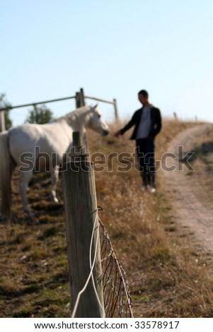Man feeding grass to a white horse in a paddock. - stock photo
