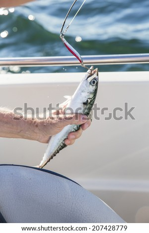 Wahoo Stock Photos Images Amp Pictures Shutterstock