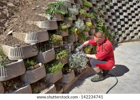 man, gardener relies flowers in retaining concrete wall - stock photo