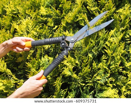 Man Gardener Trimming Hedge Garden Shears Stock Photo (100% Legal ...