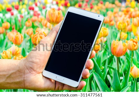 Man hand holding smartphone against spring tulips background soft focus. - stock photo
