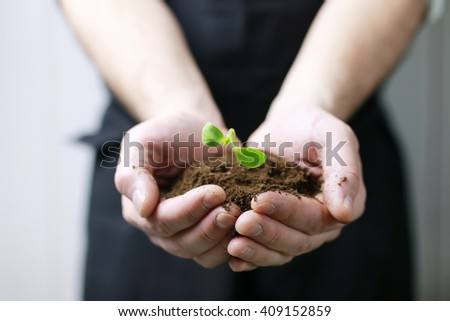 man hand holding sprout in palms - stock photo